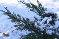 Nieve, rama, Bush, frío, invierno, copo de nieve, helada Fotos de archivo libres de regalías