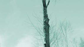 Nieve, ramas de árbol y nubes de movimiento lento almacen de video