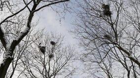 Nieve, ramas de árbol y pájaros de vuelo metrajes