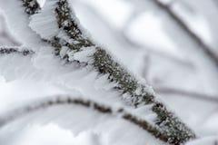 Nieve recogida en una rama Foto de archivo