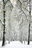 Nieve repentinamente caida en el bosque del abedul del otoño Imagen de archivo