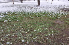 Nieve sobre hierba del parque en primavera Foto de archivo