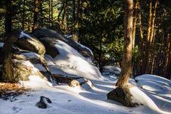 Nieve sobre piedras en un bosque de los árboles de pino imagen de archivo
