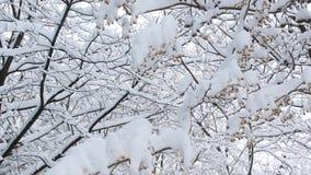 Nieve sobre ramas metrajes