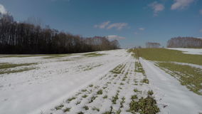 Nieve temprana de la primavera en campo de la cosecha del trigo de la agricultura después de la invernada, 4K metrajes