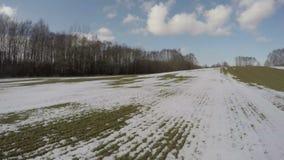 Nieve temprana de la primavera en campo de trigo con los brotes verdes, 4K almacen de video