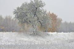 Nieve temprana en las hojas amarillas Fotos de archivo libres de regalías