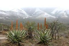 Nieve y áloe Imagen de archivo libre de regalías