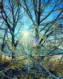 Nieve y árboles Foto de archivo libre de regalías