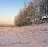 Nieve y árboles teniendo en cuenta el sol poniente Foto de archivo