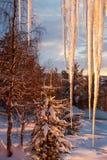 Nieve y bosque de Iceicles en la puesta del sol Fotos de archivo libres de regalías