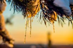 Nieve y carámbano, invierno anaranjado de la puesta del sol Imagen de archivo libre de regalías