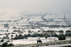 Nieve y cielo azul con las nubes y el palillo Foto de archivo libre de regalías