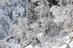 Nieve y helada en los árboles foto de archivo