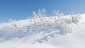 Nieve y pequeño árbol Foto de archivo