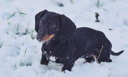 Nieve y perrito Foto de archivo libre de regalías