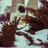 Nieve y ramas Imagen de archivo libre de regalías