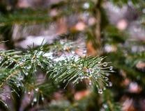 Nieve y verde O cuando el invierno da a naturaleza una chaqueta caliente fotos de archivo