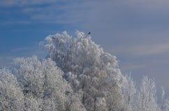 Nieves acumulada por la ventisca del invierno, invierno ruso Imágenes de archivo libres de regalías