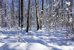 Nieves acumulada por la ventisca en bosque Fotografía de archivo libre de regalías