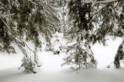Nieves acumulada por la ventisca en bosque del invierno en la estación de esquí de Jasna Fotos de archivo