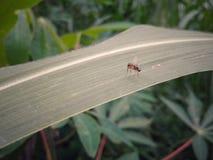 Niewiadomy insekt zdjęcia royalty free