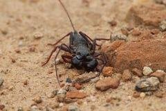 Niewiadomy insekt zdjęcie stock