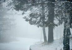 Niewidoma droga w zim sosnach lasowych Fotografia Royalty Free