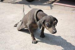 niewidomy pies Zdjęcie Stock