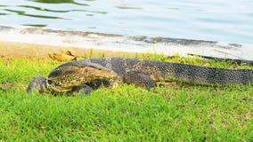 niewoli wielki jaszczurki reptilian bardzo zdjęcia stock