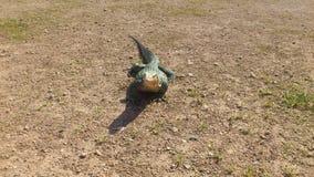 niewoli wielki jaszczurki reptilian bardzo obrazy royalty free