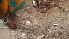 Niewolnictwo w Azja Niewprawni pracownicy Minować łyszczyk indu zbiory