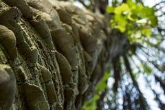 Niewygładzony drzewko palmowe bagażnik spod spodu zdjęcie royalty free