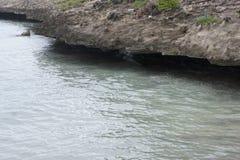Niewygładzony powulkaniczny wybrzeże ocean indyjski na wyspie Rodriguez obraz stock