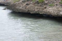 Niewygładzony powulkaniczny wybrzeże ocean indyjski na wyspie Rodriguez obrazy stock