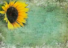 niewygładzony tło słonecznik royalty ilustracja