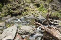 Niewygładzony tropikalny las deszczowy Terran obraz royalty free