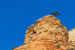 Niewygładzony Zion parka narodowego krajobraz zdjęcie royalty free