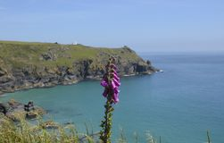 Niewygładzona linia brzegowa blisko jaszczurka punktu, Cornwall Zdjęcie Royalty Free
