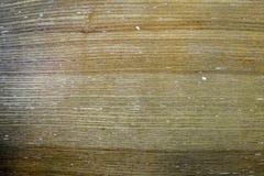Niewyg?adzona tekstura stara drewniana powierzchnia obrazy royalty free