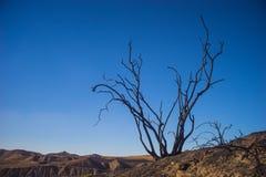 Nieżywy drzewo na grani Fotografia Stock