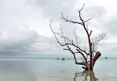 Nieżywy drzewo w wodzie Obrazy Stock