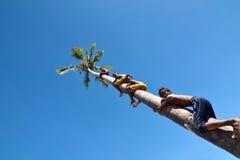 Niezidentyfikowani dzieci Denny cyganu Bajau plemię wspina się kokosowego drzewa Fotografia Stock