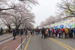 Niezidentyfikowani ludzie chodzi w Yeouido wiośnie Kwitną festiwal Obraz Royalty Free