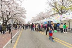 Niezidentyfikowani ludzie chodzi w Yeouido wiośnie Kwitną festiwal Zdjęcia Stock