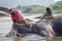 Niezidentyfikowani mężczyzna kąpać się słonia Zdjęcie Royalty Free