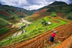 Niezidentyfikowani rolnicy robią rolnictwo pracie na ich polach na Czerwu 13, 2015 w Mu Cang Chai, jen Bai, Wietnam Zdjęcie Royalty Free