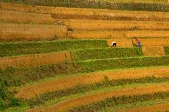 Niezidentyfikowani rolnicy robią rolnictwo pracie na ich polach na Czerwu 13, 2015 w Mu Cang Chai, jen Bai, Wietnam Obraz Stock