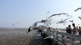 Niezidentyfikowani turyści cieszą się żywieniowego seagull przy Bangpu Samutprakan Tajlandia, Marzec 20, 2018 zbiory wideo