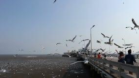 Niezidentyfikowani turyści cieszą się żywieniowego seagull przy Bangpu Samutprakan Tajlandia, Marzec 20, 2018 zdjęcie wideo